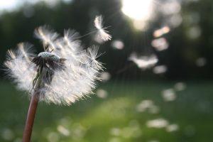 allergie pollen